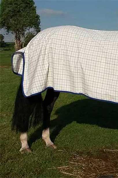 rip stop horse combo purple blue back right jojubi saddlery