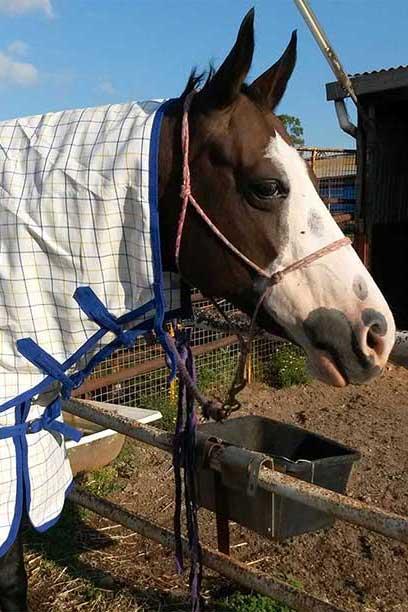 rip stop horse combo purple blue front right 2 jojubi saddlery