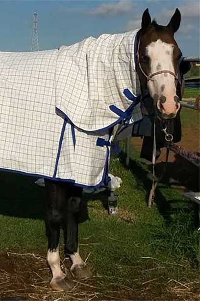 rip stop horse combo purple blue front right jojubi saddlery