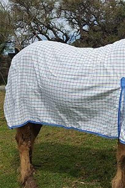 rip stop horse combo white blue back right jojubi saddlery