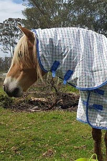 rip stop horse combo white blue front left jojubi saddlery