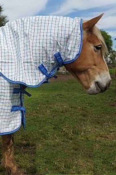 rip stop horse combo white blue front right jojubi saddlery