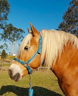 jojubi horse halter set1