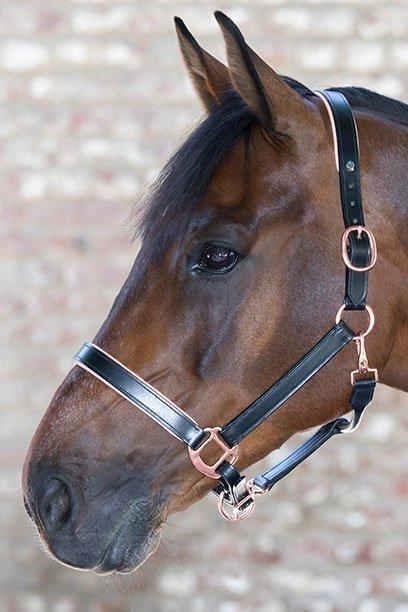 horse halter rose gold jojubi saddlery