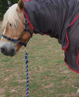 micro mesh horse rug combo left side front jojubi saddlery