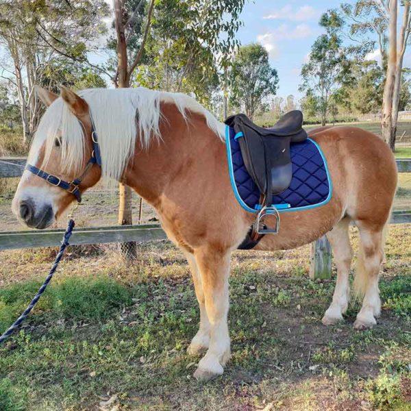 horse saddle pad navy on horse left side jojubi saddlery 800